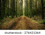 Forest Road Through A Swedish...