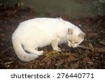 White Cat With Mouse