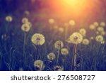 Dandelion Wild Flowers In Sunset
