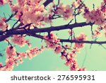 Apricot Tree Branch With...