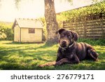 Stock photo dog in a garden with a dog house 276779171