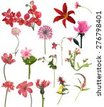 red flowers collection isolated ... | Shutterstock . vector #276798401