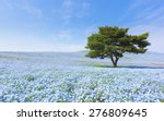 Mountain  Tree And Nemophila A...