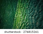 Tree Bark Texture With Green...