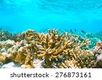 coral reef at south ari atoll ... | Shutterstock . vector #276873161