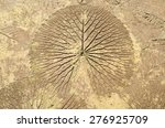marks of leaf on the concrete... | Shutterstock . vector #276925709