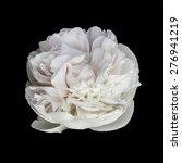 White Peony Flower Isolated On...