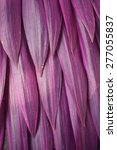 purple leaves background | Shutterstock . vector #277055837