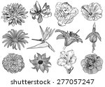 vector illustration of flowers... | Shutterstock .eps vector #277057247