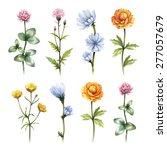 watercolor wild flowers... | Shutterstock . vector #277057679