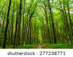 summer forest trees. nature... | Shutterstock . vector #277238771