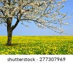 Flowering Tree On Dandelion...