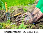Gardener  Hands Preparing Soil...