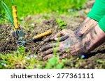 Gardener  Hands Preparing Soil...