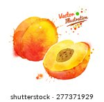 vector watercolor hand drawn... | Shutterstock .eps vector #277371929