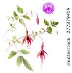 Fuchsia Pink Flower  ...