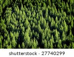View Of Forrest Of Green Pine...