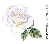 Stock photo white rose isolated on background watercolor illustration 277580471