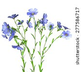flax plant | Shutterstock . vector #277586717
