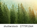 Healthy Green Trees In A Fores...