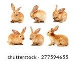 Rabbits Isolated On White...