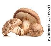 shiitake mushroom on the white... | Shutterstock . vector #277597055