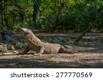 Постер, плакат: Komodo Dragon The Komodo
