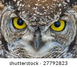 african spotted eagle owl with... | Shutterstock . vector #27792823