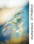 wildflower background | Shutterstock . vector #277938515