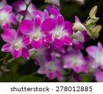 orchids pink beautiful bouquet... | Shutterstock . vector #278012885