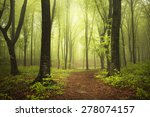 Beautiful Path In Misty Forest