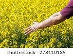 Man Touching Rapeseed Flowers....