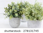 Green Plants In Pots On A Whit...