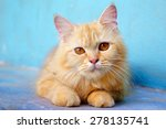 Stock photo orange little cat on the isolated background 278135741