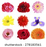 beautiful flowers collage | Shutterstock . vector #278183561