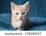 Stock photo orange tabby kitten paw up looking at camera 278250527
