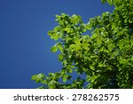 branches with green leaves of... | Shutterstock . vector #278262575
