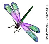 Stock vector watercolor dragonfly 278265311
