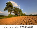 A Cluster Of Pine Trees In The...