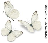 three white butterfly  isolated ...   Shutterstock . vector #278390405