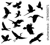 Set Of Flying Birds Silhouette...