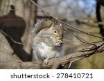 Detail Of Wild Squirrel And...