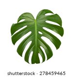 Green Big Leaf Isolated On...