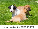 Stock photo mixed breed adorable cute little puppies playing outdoors on a meadow on a sunny spring day 278519471