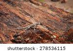 Lizard On A Petrified Log ...