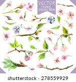 watercolor apple flowers ... | Shutterstock .eps vector #278559929
