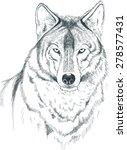 a sketch of a wolf. handmade. | Shutterstock .eps vector #278577431