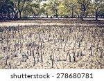Mangrove Swamp At Low Tide In...