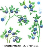 watercolor set of bilberries... | Shutterstock .eps vector #278784311