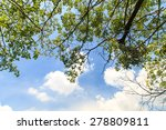 Tree Branches At A Blue Sky